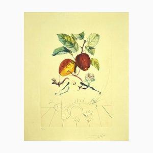 Salvador Dalí, Pomme Dragon, Evas Apfel, Original Radierung, 1969