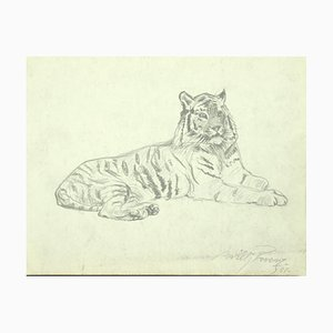 Willy Lorenz, Tiger, Original Pencil on Paper, 1958