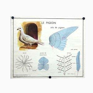 Affiche d'Ecole La Poule / Le Pigeon, 1950s