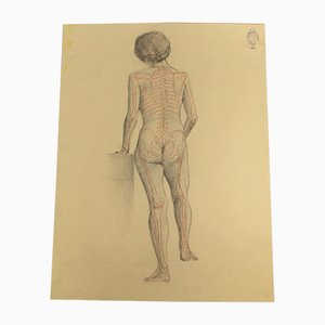 Academy Anatomy of Human Figure Drawing, Department of Fine Arts
