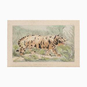 Emile Henri Laporte, El tigre, litografía, 1860