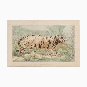 Emile Henri Laporte, The Tiger, Lithografie, 1860