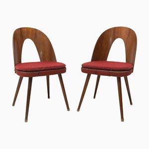 Mid-Century Nussholz Esszimmerstühle von Antonin Suman für Tatra Furniture