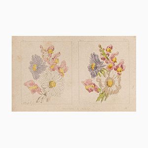 Litografia originale su carta, E. Laport - the Flowers - 1860