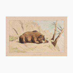 Litografía E. Laport - the Bear - Original en lienzo - 1860