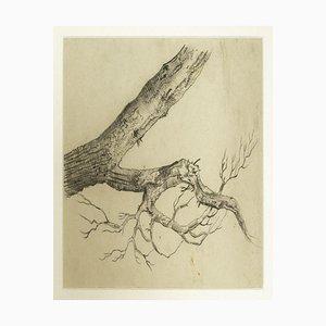 Inconnu, Arbre, Dessin au crayon, Début du XXe siècle