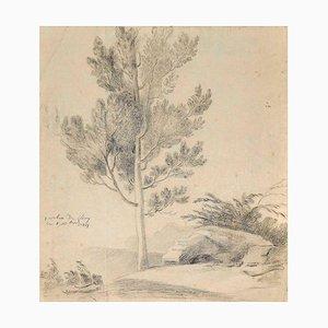 Inconnu, arbre unique, crayon sur papier, 1817