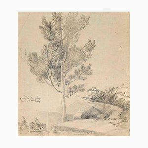 Unknown, Sole Tree, Pencil on, 1817