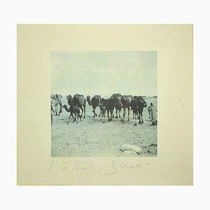 Bettino Craxi, Kamele in der tunesischen Wüste, 1995, Fotolithografie