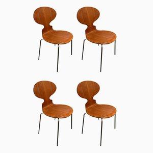 Sedie Ant di Arne Jacobsen, anni '60, set di 4