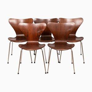 Series 7 Modell 3107 Palisander Esszimmerstühle von Arne Jacobsen, 1960er, 5er Set