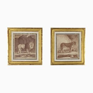Engravings Figuring A Lion and A Lioness, 19th Century, Set of 2