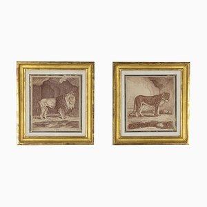 Incisione raffigurante un leone e una leonessa, XIX secolo, set di 2