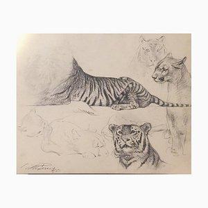 Wilhelm Lorenz - Studio di tigre e leonessa - Disegno originale - 1958