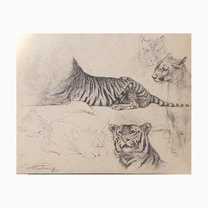 Wilhelm Lorenz - Study of Tiger and Lioness - Original Drawing - 1958
