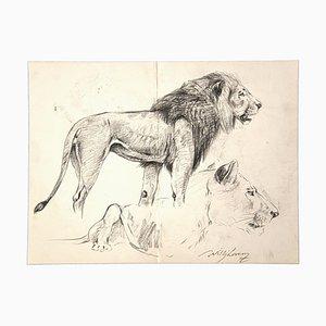 Wilhelm Lorenz - Etude de Lion et Lionne - Dessin Original - Milieu 20ème Siècle