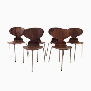 Modell Ant FH 3100 Stühle aus Palisander Erste Version von Arne Jacobsen für Fritz Hansen, 1950er, 6er Set