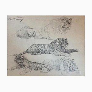 Wilhelm Lorenz - Tiger at only - Original Pencil - Mid-20th Century