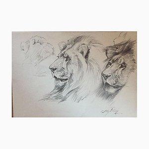 Wilhelm Lorenz - Lion - Original Pencil - Mid-20th Century