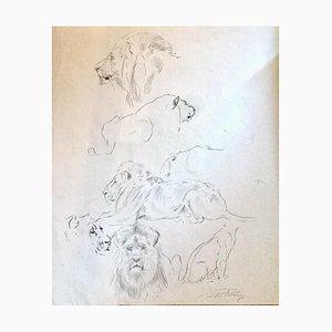 Wilhelm Lorenz - Study of Lion - Original Pencil - Mid-20th Century