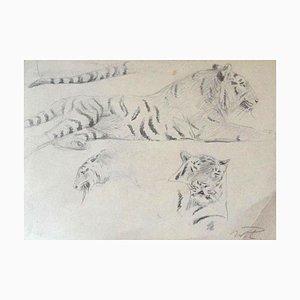 Wilhelm Lorenz Tigerstudie - Original Bleistift - Mitte 20. Jahrhundert