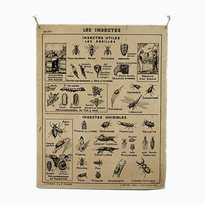 Póster escolar vintage de Hatier, Insects and Fish, años 60