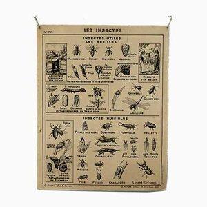Vintage Schulposter von Hatier, Insects and Fish, 1960er