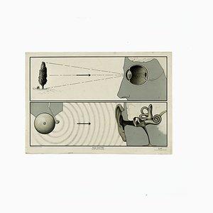 Mid-Century Lehrtafel, Ohr und Auge
