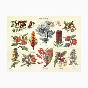 Wild Flowers Botanical Poster from Tassoti, 1970s