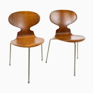 Chaise Ant Modèle 3101 en Teck par Arne Jacobsen, Set de 2