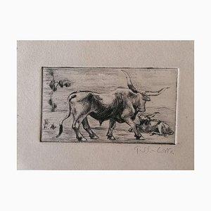 Unknown - Bulls - Original Etching on Cardboard - Early 20th Century