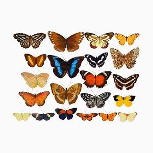 Bridget Orlando, Schmetterlinge, Öl auf Leinwand