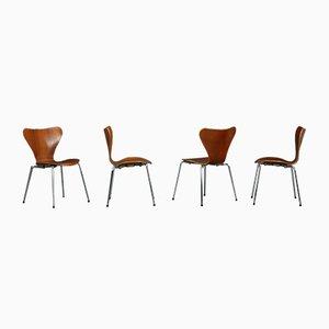 Teak Stacking Series 7 3107 Chair by Arne Jacobsen for Fritz Hansen