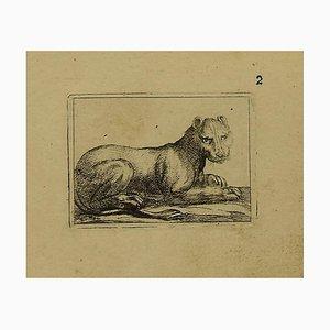 Antonio Tempesta, the Lioness, Etching, 1630