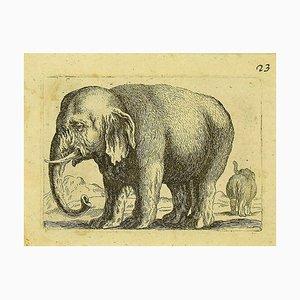 Incisione raffigurante Antonio Tempesta, elefante, inizio XIX secolo