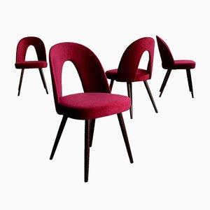Samt Esszimmerstühle von Antonín Šuman für Mier Topoľčany, 1960er, 4er Set