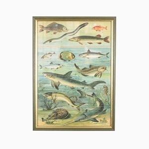 Litografía húngara antigua de pez, década de 1880