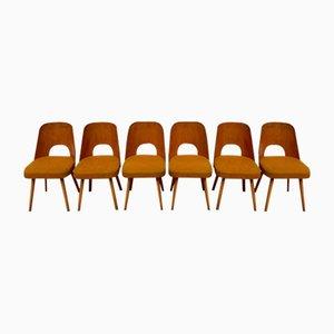 Mid-Century Esszimmerstühle von Oswald Haerdtl für TON, 6er Set
