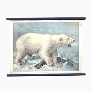 Affiche Scolaire d'un Ours Polaire, Lithographie, Début 20ème Siècle
