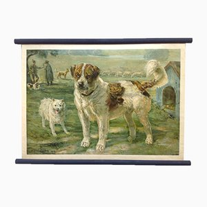 Póster escolar de perro de pastor Saint Bernard Keeshond, litografía, principios del siglo XX