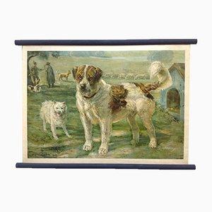 Schulposter von Dog Saint Bernard Keeshond Sheepdog, Lithographie, frühes 20. Jahrhundert