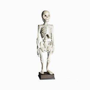 Squelette Humain en Bois