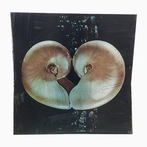 Vintage Print on Plaque, the Nautilus