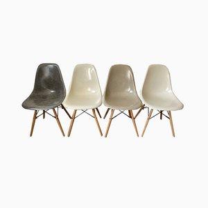 Sedie da pranzo DSW Mid-Century in fibra di vetro grigia e quercia di Charles & Ray Eames per Herman Miller, set di 4