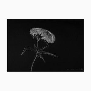 Secret Garden 14 von Alina Aldea