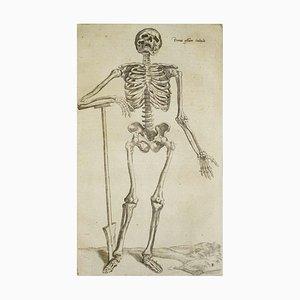Andrea Vesalio - The Human Skeleton - Radierung von De Humani Corporis Fabrica- 1642