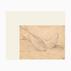 Jan Peter Verdussen - the Fish - Crayon Original sur Papier - 1775 Ca.