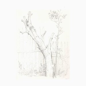 Andrew Roland Brudieux - Saint Moreil Tree - Pencil Drawing - 1960s