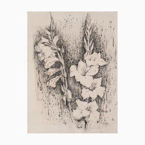 Linda Chittaro, Gladiolus, China Tinte, 1956