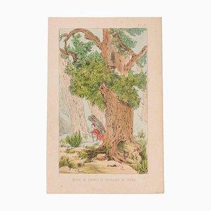 Emile Henri Laporte - Study of a Trunk - Lithograph - 1860s